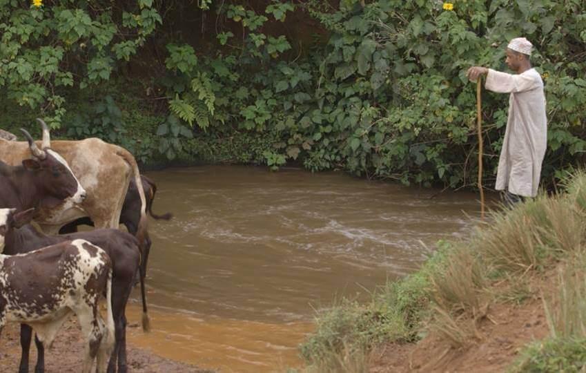 Cattle-Cameroon-crop
