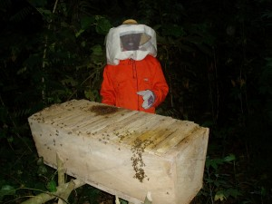 Beekeeper in Ghana