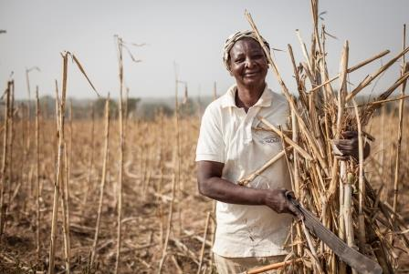 Grace Ulo clearing her harvested sorghum  field