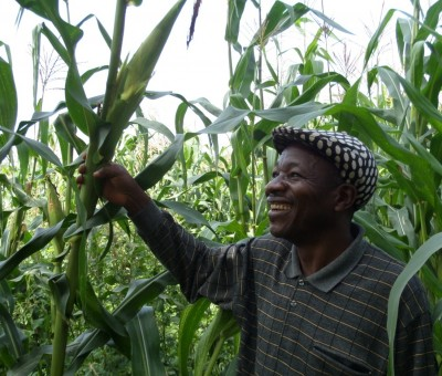 An A-Maize-ing impact on Maize crops thanks to Alliance Farming in North-West Cameroon!